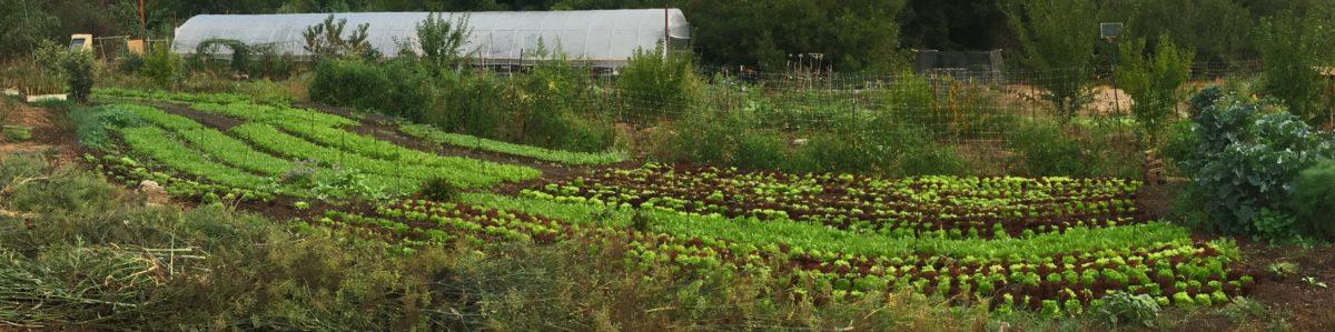 contour market garden